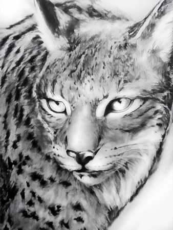 cruel: black and white painted lynx