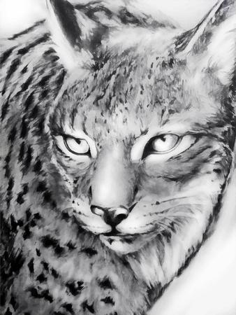 zwart en wit geschilderde lynx