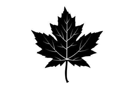 maple leaf. vector icon on white. Vector illustration Illustration