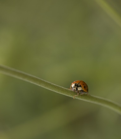 Determine of ladybug all alone climbing a plant stalk with lots of room for copy.