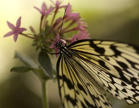 Macro butterfly with purple flower.