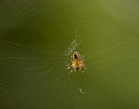 My web, my home - building spider web