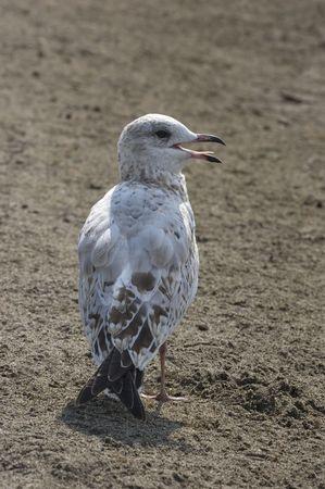 Stop following me: bird on beach