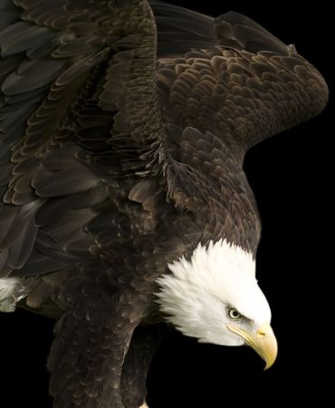 Eagle Portret Stockfoto - 4181454