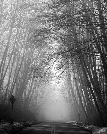 winter road: Fog on Burnaby Mountain Stock Photo
