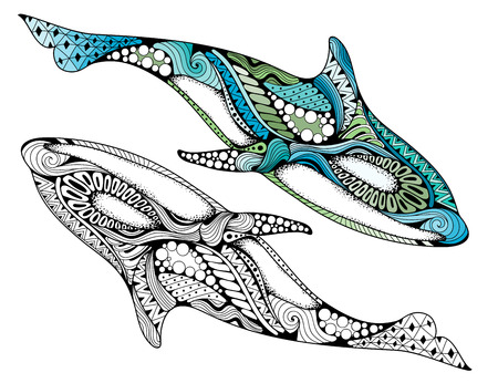 Ethnic animal doodle detail pattern - killer whale  illustration. Hand drawn Orcinus orca isolated on white background for adult anti-stress coloring book pages