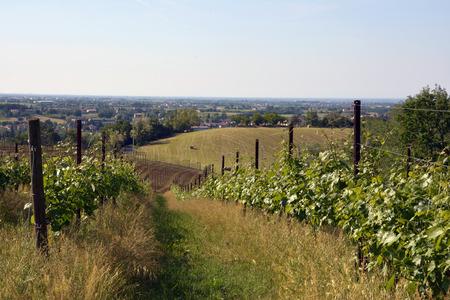 reggio emilia: view of a part of Reggio Emilia from a vineyard