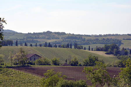 reggio emilia: vineyard in the hills of Reggio Emilia