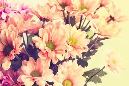 Bouquet of pink marguerites