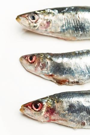 Fresh sardine on a white plate Stockfoto