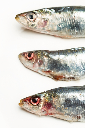 Fresh sardine on a white plate 版權商用圖片