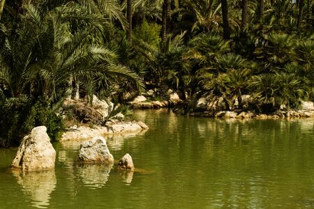 A park with palms and a green water lake 版權商用圖片