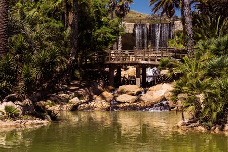 A park with palms, a wooden bridge and a waterfall