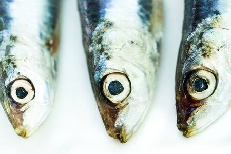 Fresh and raw sardines on a plate in a close up view