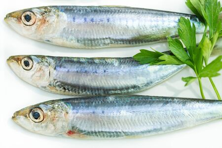 Fresh and Raw Sardines on a Plate with Parsley Stok Fotoğraf - 129858807