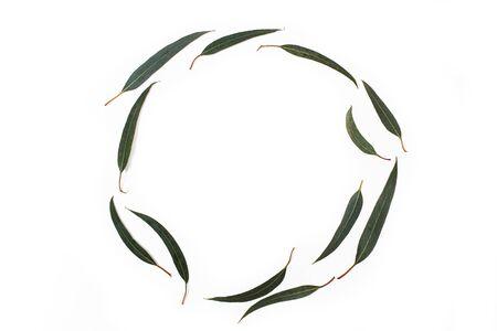 Eucalyptus leaves on a white background
