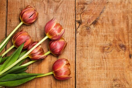 Tulips on a rustic wooden table