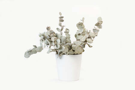 Branches with eucalyptus leaves in a white ceramic pot