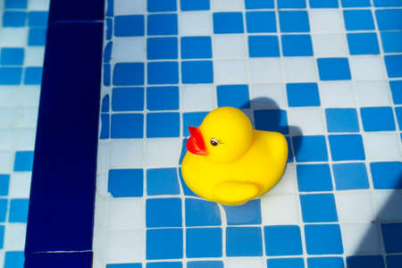 A yellow rubber duck on the water in a swimming pool Standard-Bild