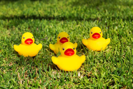 Four yellow rubber ducks on the grass