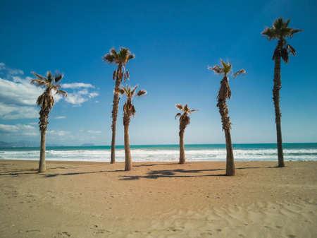 Palm trees in the beach in a sunny day in Alicante Standard-Bild
