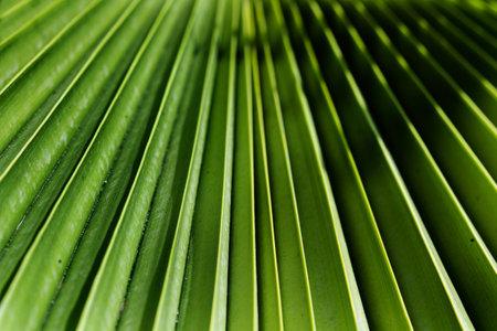 A palm leaf in a close up view