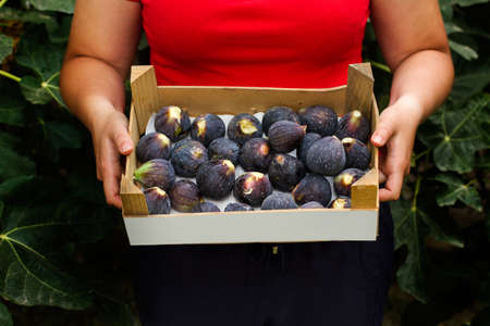 Woman holding a box with figs in front of a fig plant