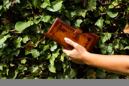 Woman hand holding a women purse in front of a creeper plant Standard-Bild