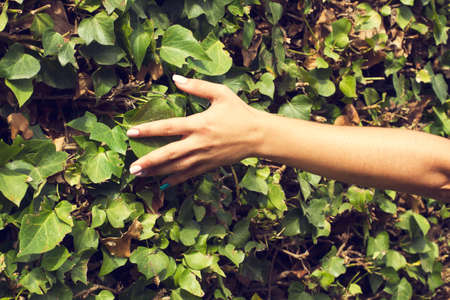 Woman touching with her hand a climbing plant