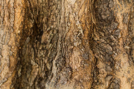 Tree trunk texture in a close up view