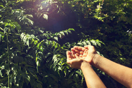 Woman with asking hands in front of a green plant in a sunny day Standard-Bild