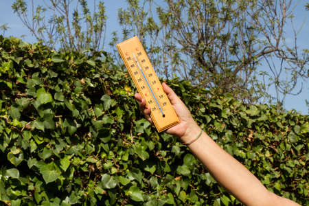 Woman hand holding a thermometer in the garden with a climbing plant behind