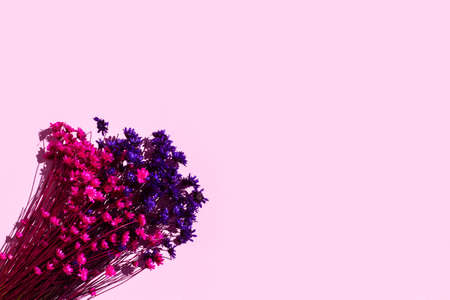 Pink and purple dry flowers on a pink background
