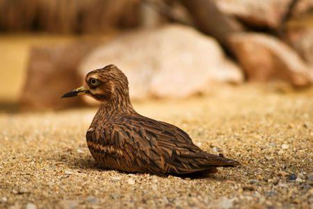 Bird on desert photo