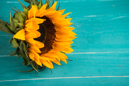 Yellow fresh sunflowers on rustic wooden table background