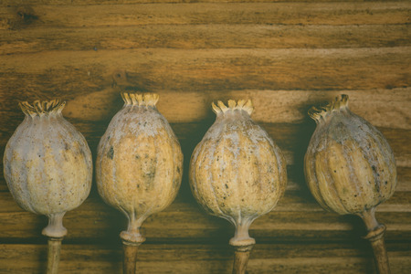 Poppy heads in vintage style on wood photo