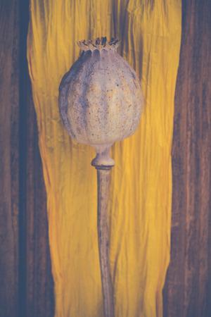 poppy head and yellow ribbon photo