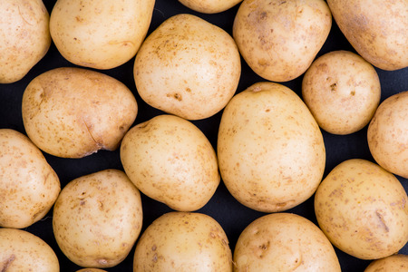 farm fresh: Farm patate fresche sfondo Archivio Fotografico