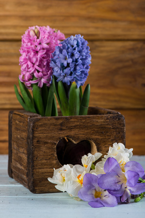 Spring bulb flowers in vintage wooden box photo