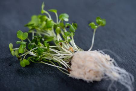 cress: Fresh cress salad on black slate background