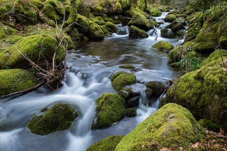 lapse: Wild stream in old woodland forest,time lapse water motion
