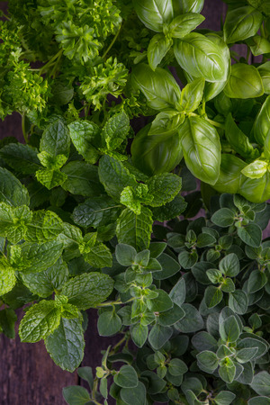 Fresh herbs from home garden, green food background