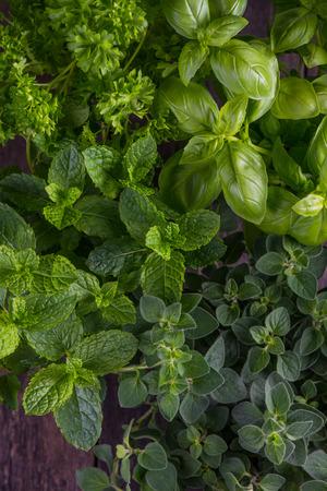 Verse kruiden uit eigen tuin, groen voedsel achtergrond Stockfoto