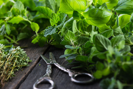 Fresh herbs cut in home garden, on wooden rustic table
