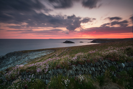 south west england: Dramatic sunrise over cliffs with wild flowers in Cornwall, South West England