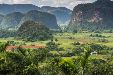 Panoramic view over landscape with mogotes in  Vinales Valley ,Cuba