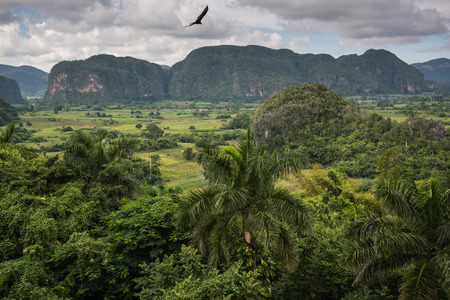 pinar: Panoramic view over landscape with mogotes in Valley Vinales,Cuba Stock Photo