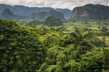 pinar: Panoramic view over landscape with mogotes in  Vinales Valley ,Cuba