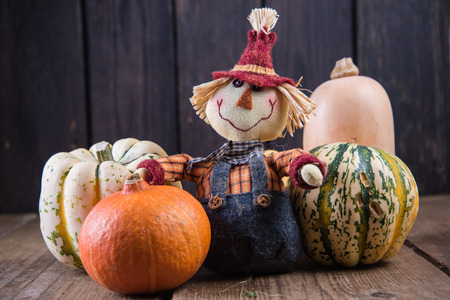 autumn scarecrow: funny scarecrow with pumpkins on wooden background