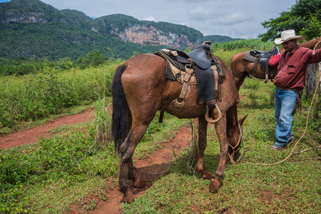 coutryside: Vinales Valley, Cuba - September 24, 2015:  Local cowboy prepare horese for ridding, in coutryside road. In many areas in Cuba horses are only transport option.